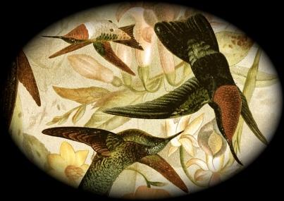 Various_Hummingbirds_2_5